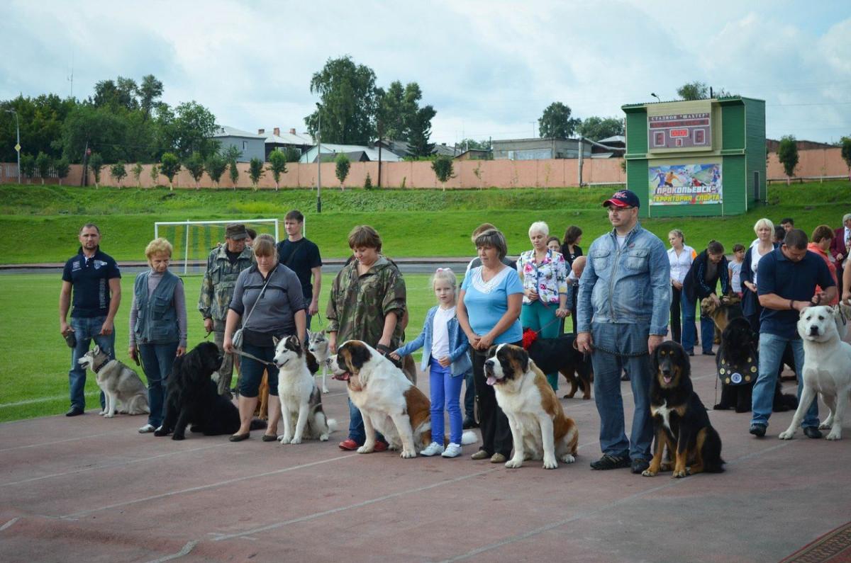 В Прокопьевске состоится международная выставка собак