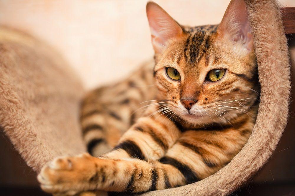 Необычная вакансия: в России предлагают работу для кота