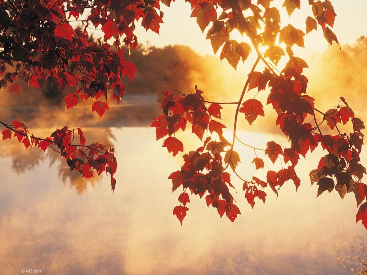 Синоптики рассказали, какой будет погода в сентябре