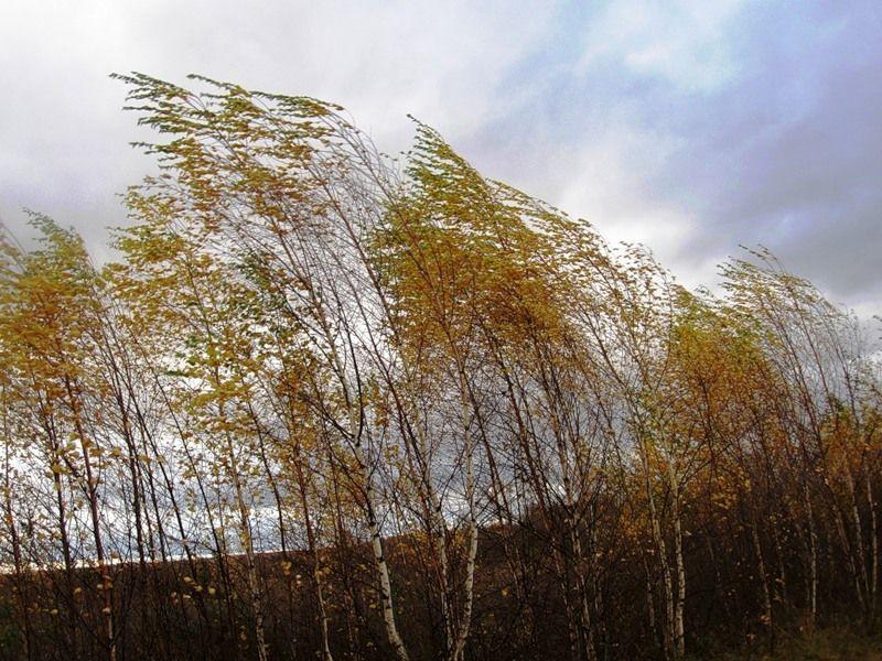 МЧС Кузбасса предупреждает об ухудшении метеоусловий