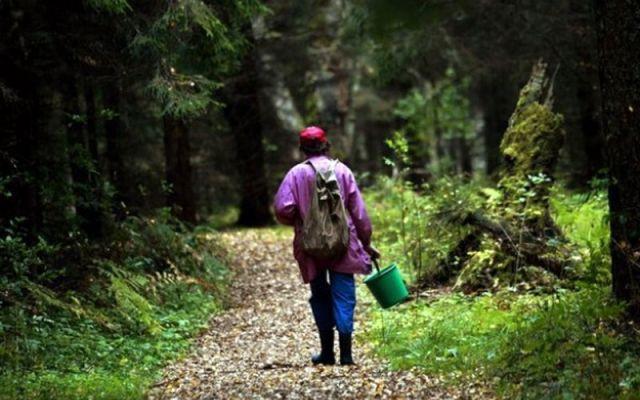 Прокопчанка ушла в лес за грибами и заблудилась, помогли полицейские