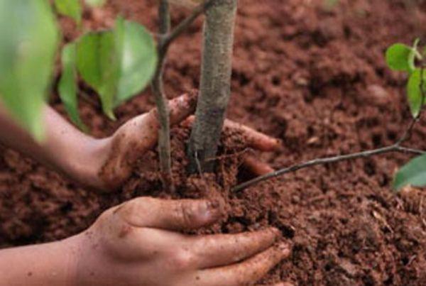 В Прокопьевске за 1 день высажено более 2 тысяч саженцев деревьев и кустарников