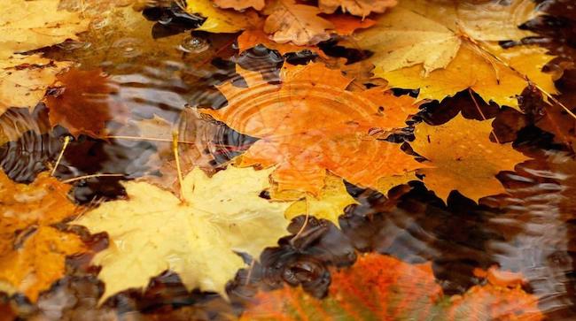 Синоптики рассказали, какой будет погода в октябре