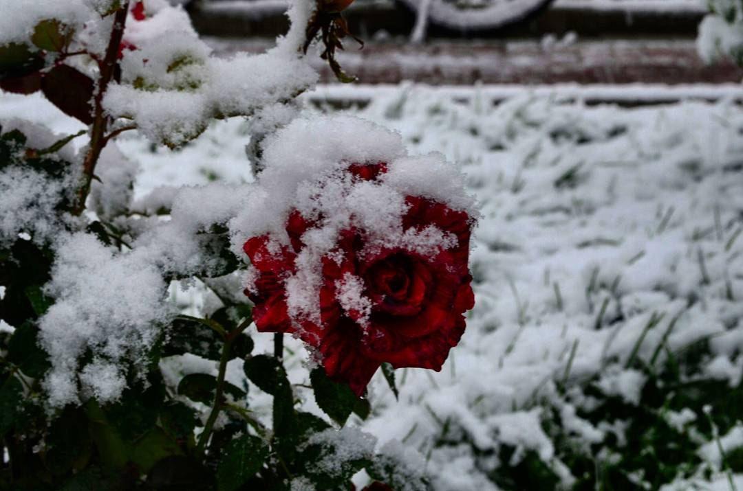 Прокопьевск засыпало снегом (фото)
