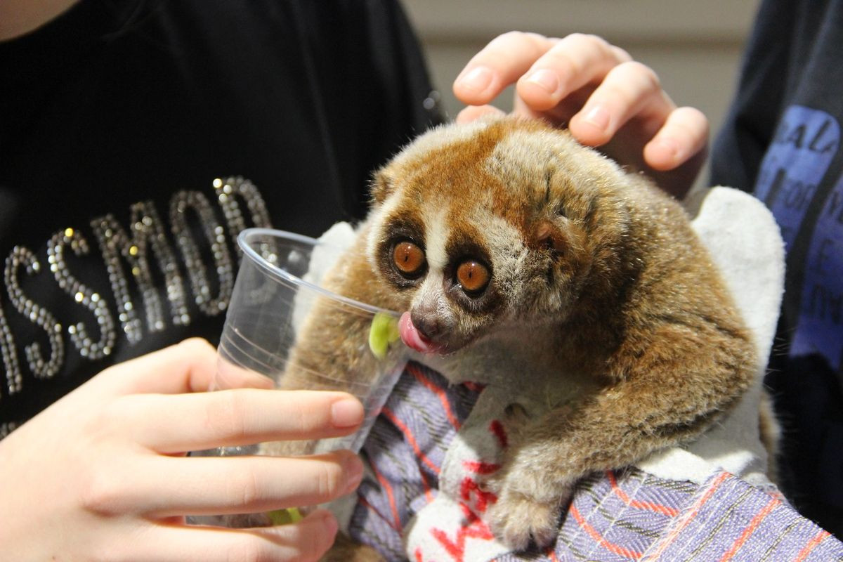 В России намерены запретить контактные зоопарки
