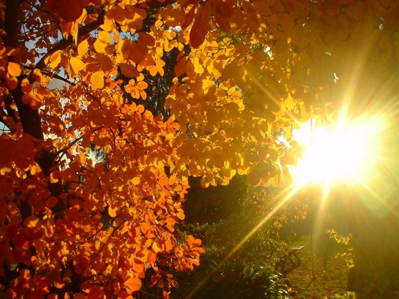 Синоптики:  На этой неделе ожидается хорошая осенняя погода