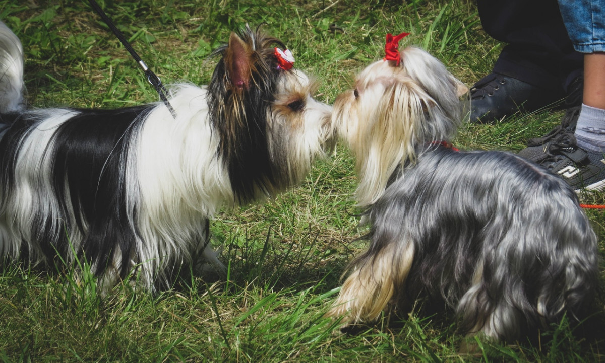 Когда в Прокопьевске состоится выставка собак