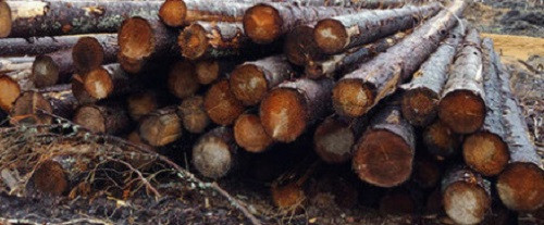 Россия может ввести полный запрет на экспорт леса в Китай