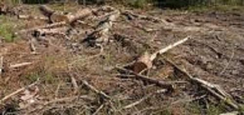 Более 40 га леса в Кузбассе вырубили незаконно
