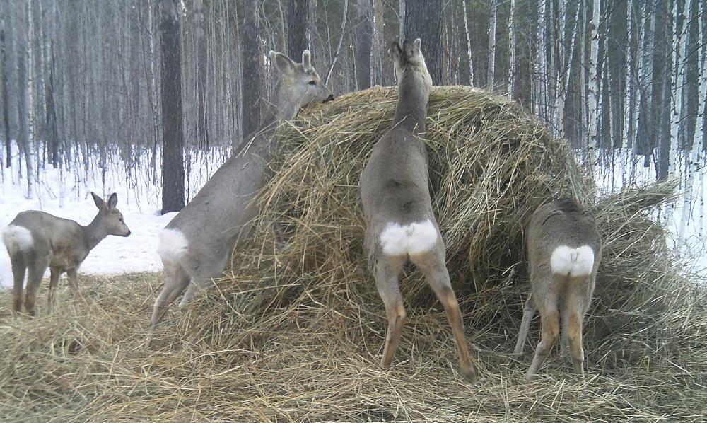 В Кузбассе трое браконьеров нанесли ущерб животному фонду на 410 тыс.рублей