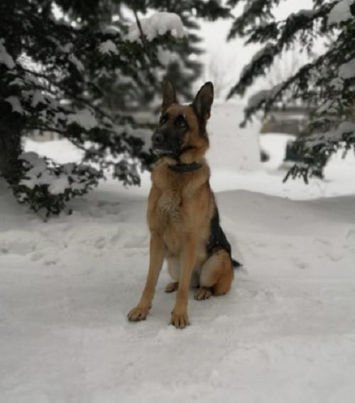 В Прокопьевске служебно-розыскная собака помогла найти запрещенные вещества