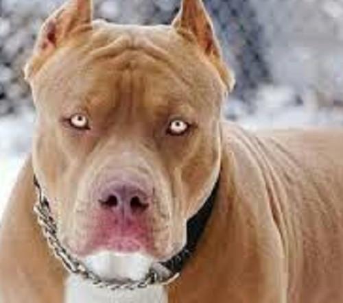 В Кузбассе ребенку выплатят компенсацию за укусы бродячих собак