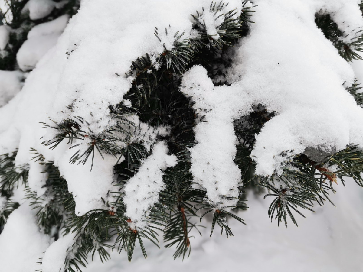 Синоптики: аномально-холодная погода сохранится