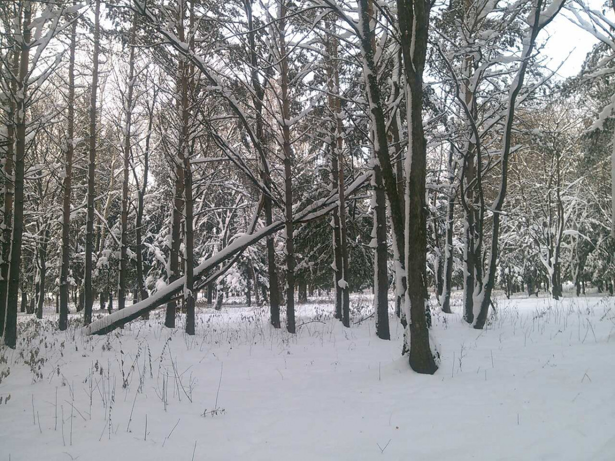Синоптики прогнозируют небольшое похолодание