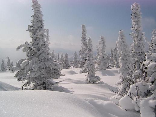 В Шерегеше погиб турист, наткнувшись на собственную лыжу