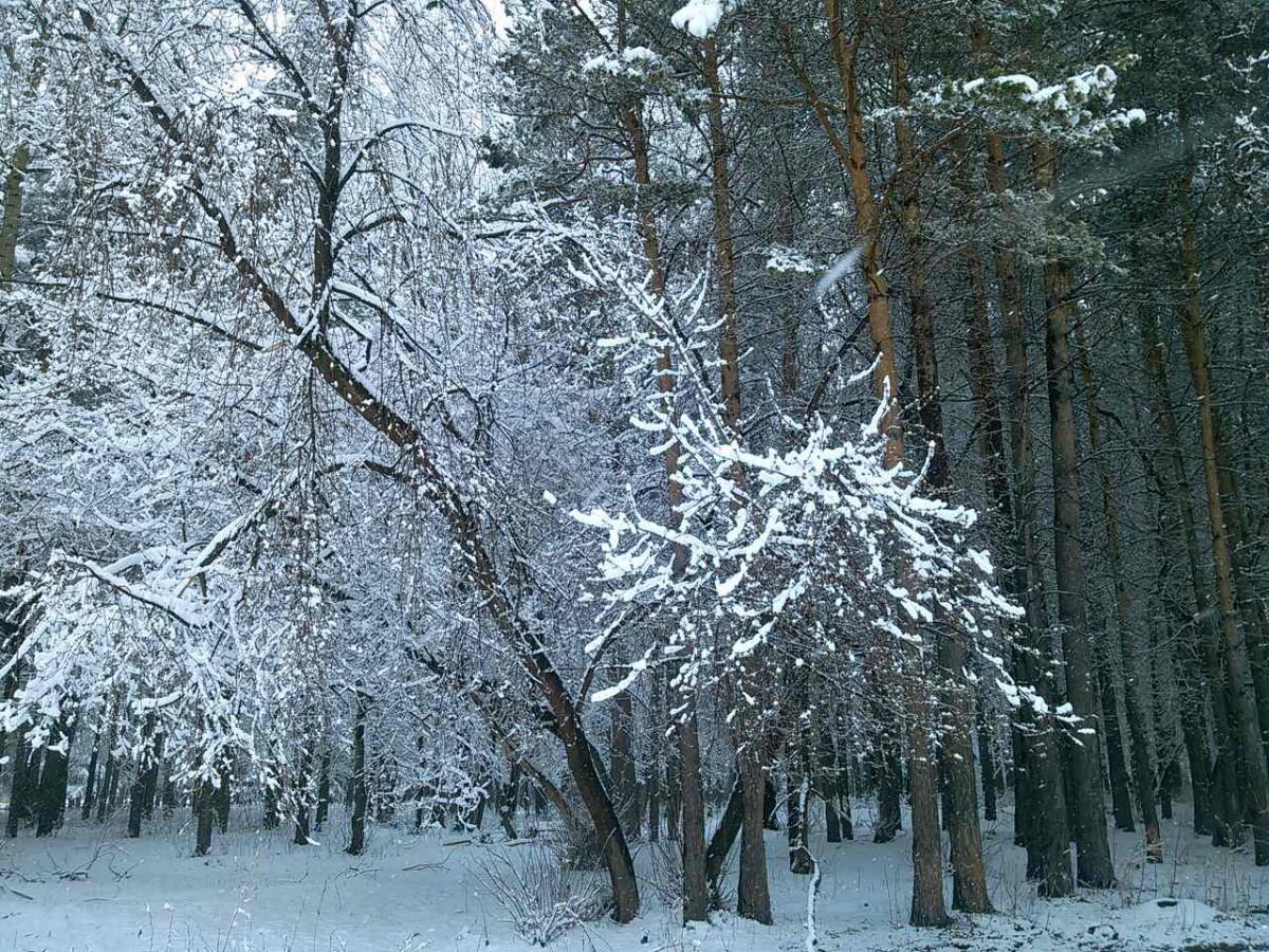 Синоптики предупреждают об ухудшении погоды и похолодании