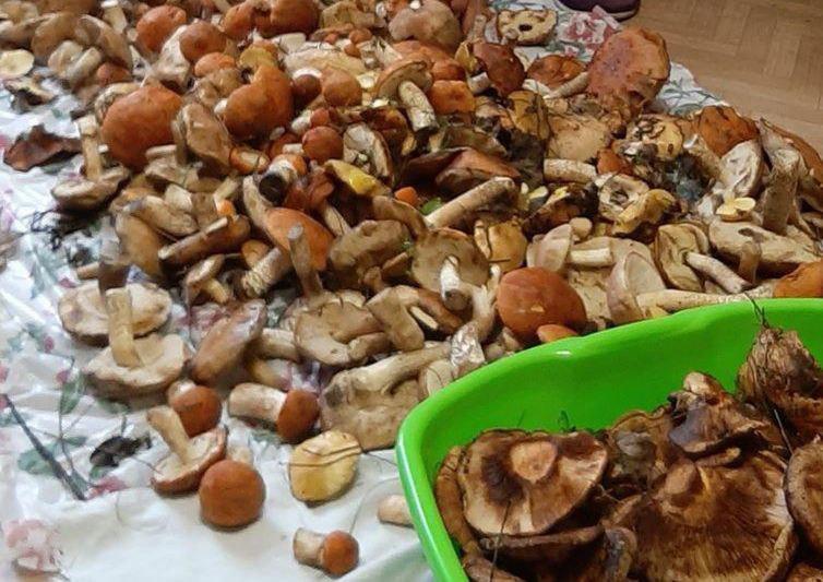 190 кг грибов собрали прокопчане за минувшую неделю