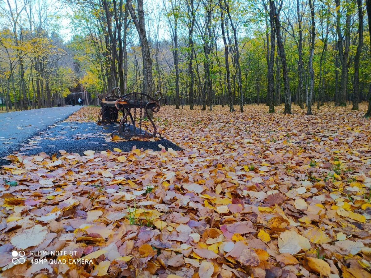 Прокопчанку поразил осенний Молодежный парк (фото)