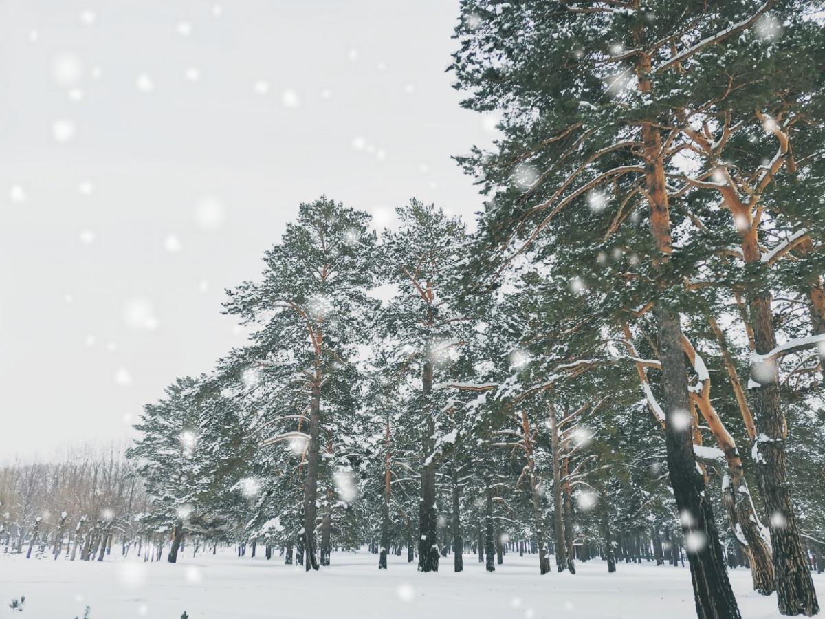Синоптики рассказали, какой будет погода в феврале