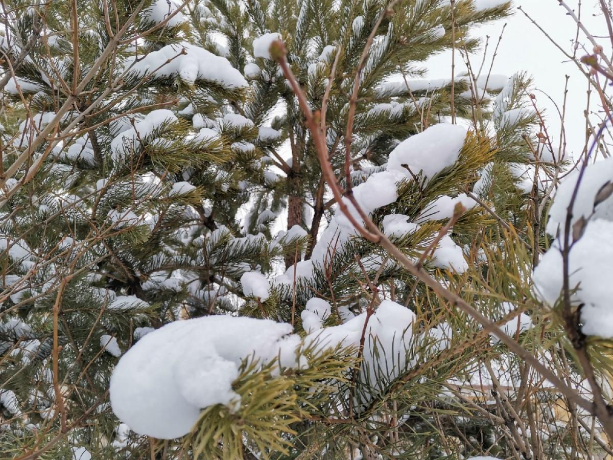 Синоптики предупреждают об усилении ветра и гололедице