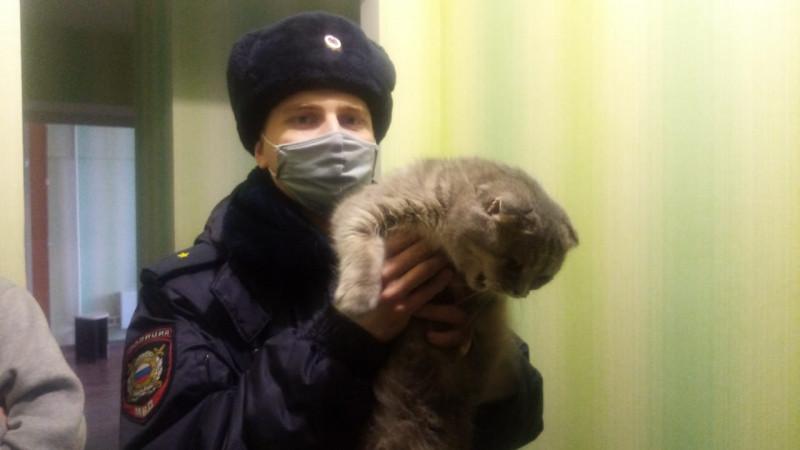 В Кузбассе кошка, спасаясь от хозяина, выпрыгнула с 9 этажа и упала на авто