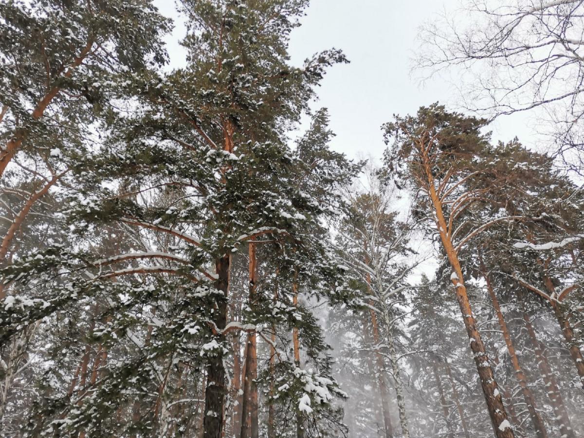 Синоптики предупреждают, ночью ожидается снегопад