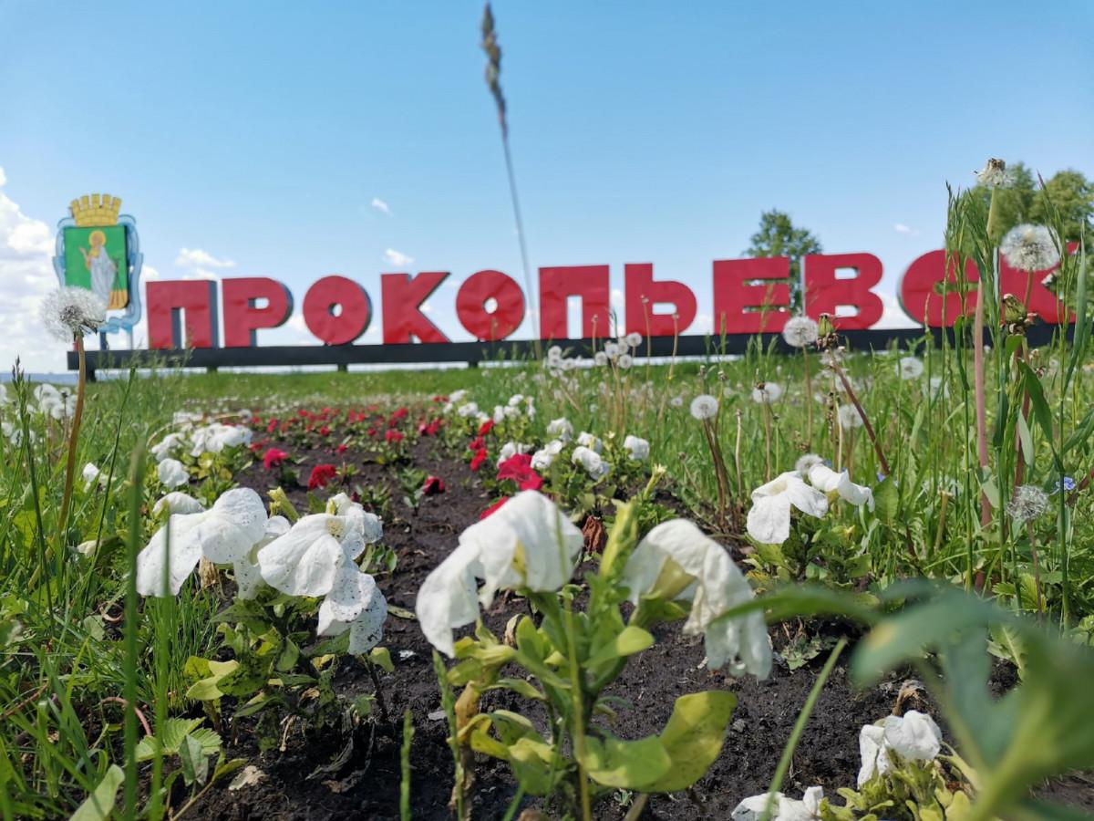 В Прокопьевске высадили более 70 тысяч цветов