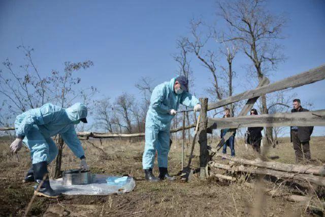 В Прокопьевском районе обнаружен бесхозный скотомогильник