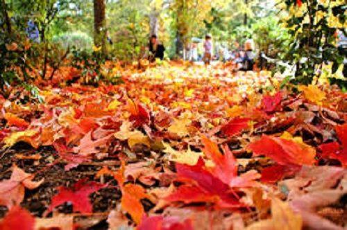 Синоптики: первый день ноября порадует теплом