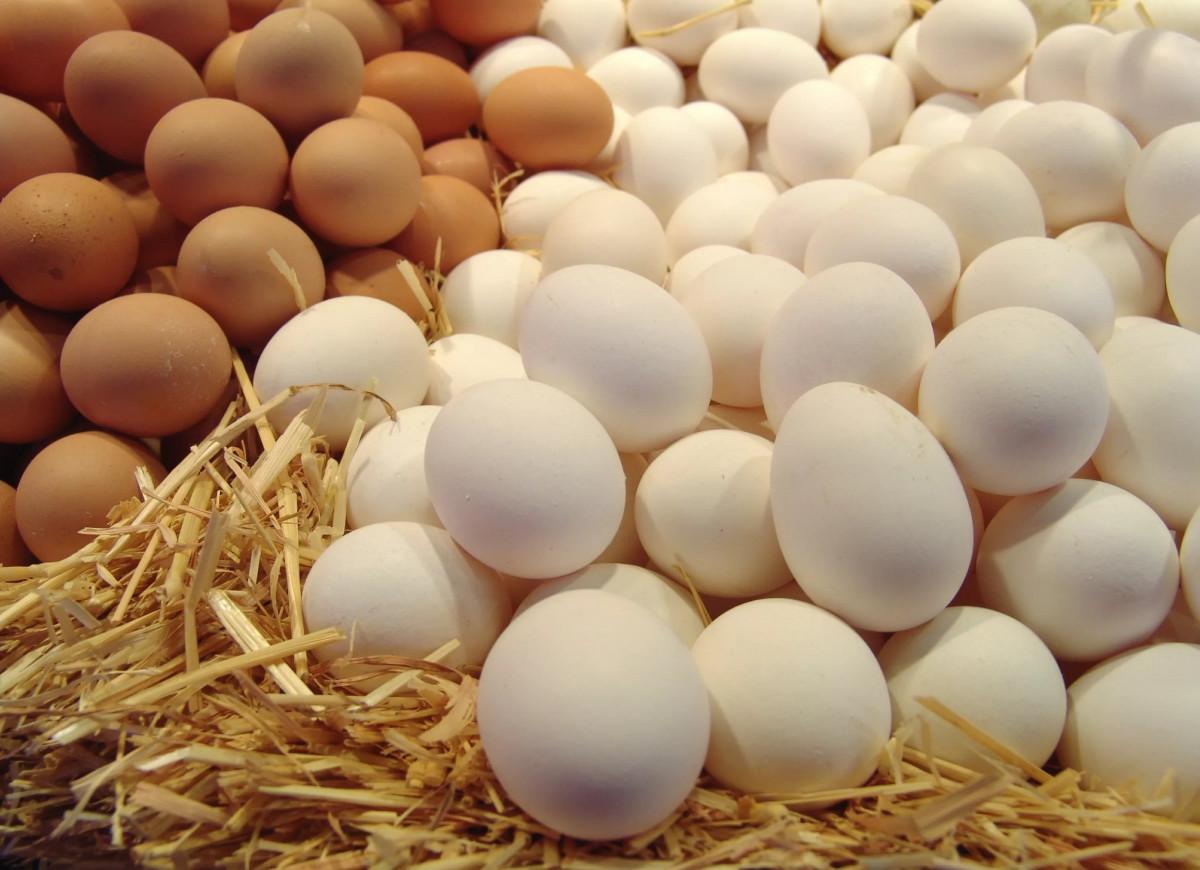 550 тысяч яиц планируют продать в Кузбассе за один день