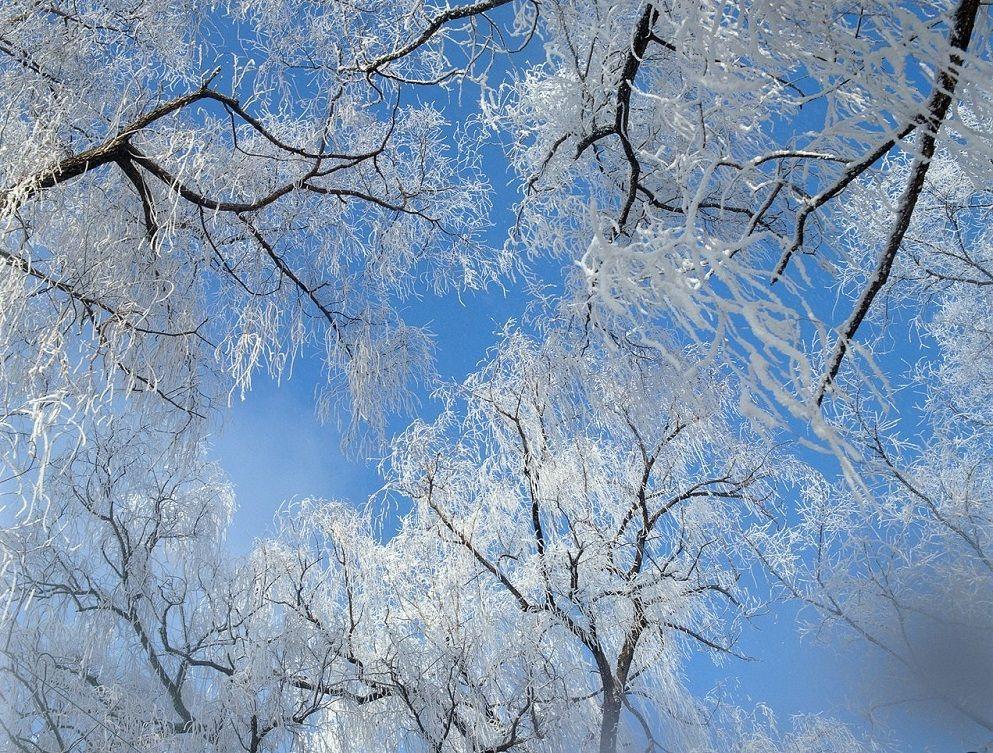 Синоптики составили предварительный прогноз погоды на декабрь