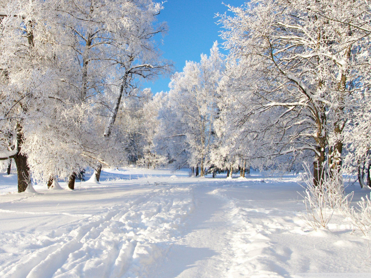 В Кузбассе за ночь выпала декадная норма снега