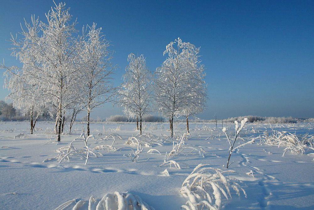 Синоптики составили прогноз погоды на первые выходные декабря