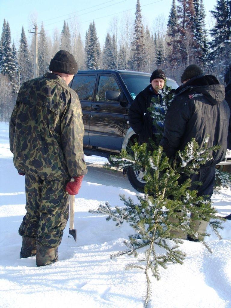 Срубил ель - получи штраф: в Прокопьевском и Новокузнецком районах задержаны черные лесорубы