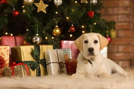 Новый год у ворот: какие подарки дарить, встречая 2018 - Год Желтой Собаки