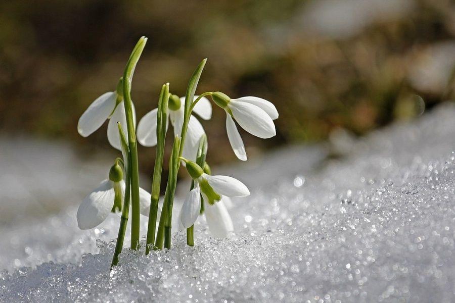 2апреля вМордовии предполагается мокрый снег идождь