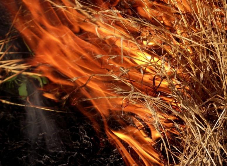 МЧС предупреждает о сильном ветре и высокой пожароопасности