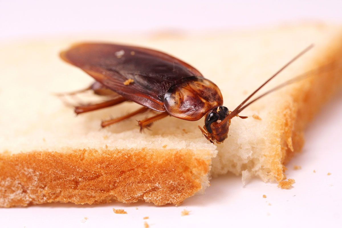 В Кузбассе суд оштрафовал владельца пекарни за тараканов