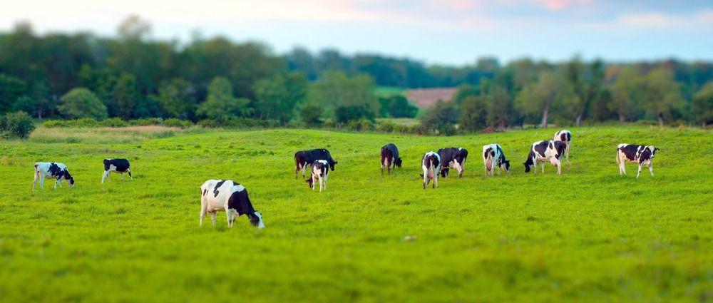 В Кузбассе сельхозкооперативы и фермеры получат гранты на развитие предприятий