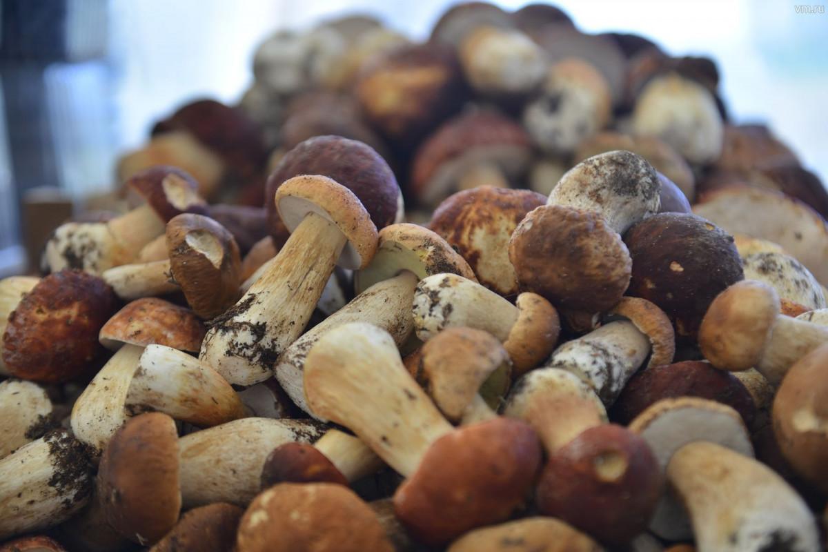 Роспотребнадзор составил более  рекомендации посбору иприготовлению грибов
