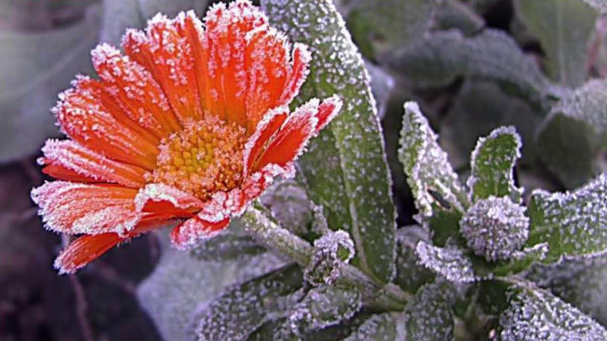 Синоптики: в Кузбассе ожидаются заморозки