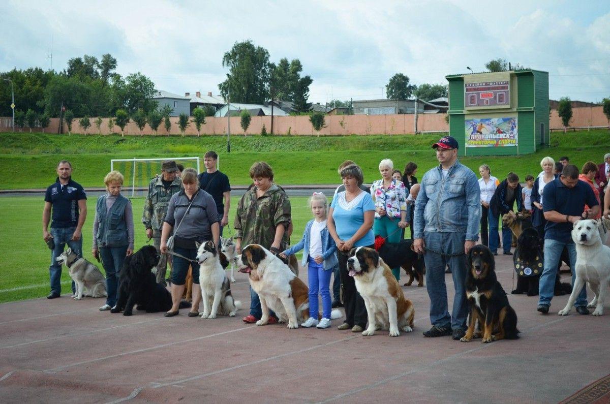 В Прокопьевске состоится Международная сертификатная выставка собак