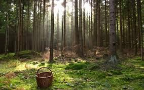 Пенсионерка из Белова больше суток пыталась выбраться из леса в Прокопьевском районе