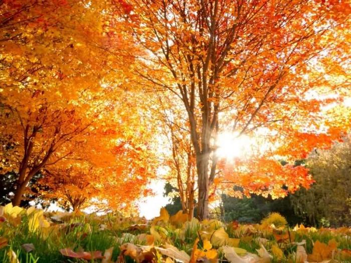Синоптики составили предварительный прогноз погоды на октябрь
