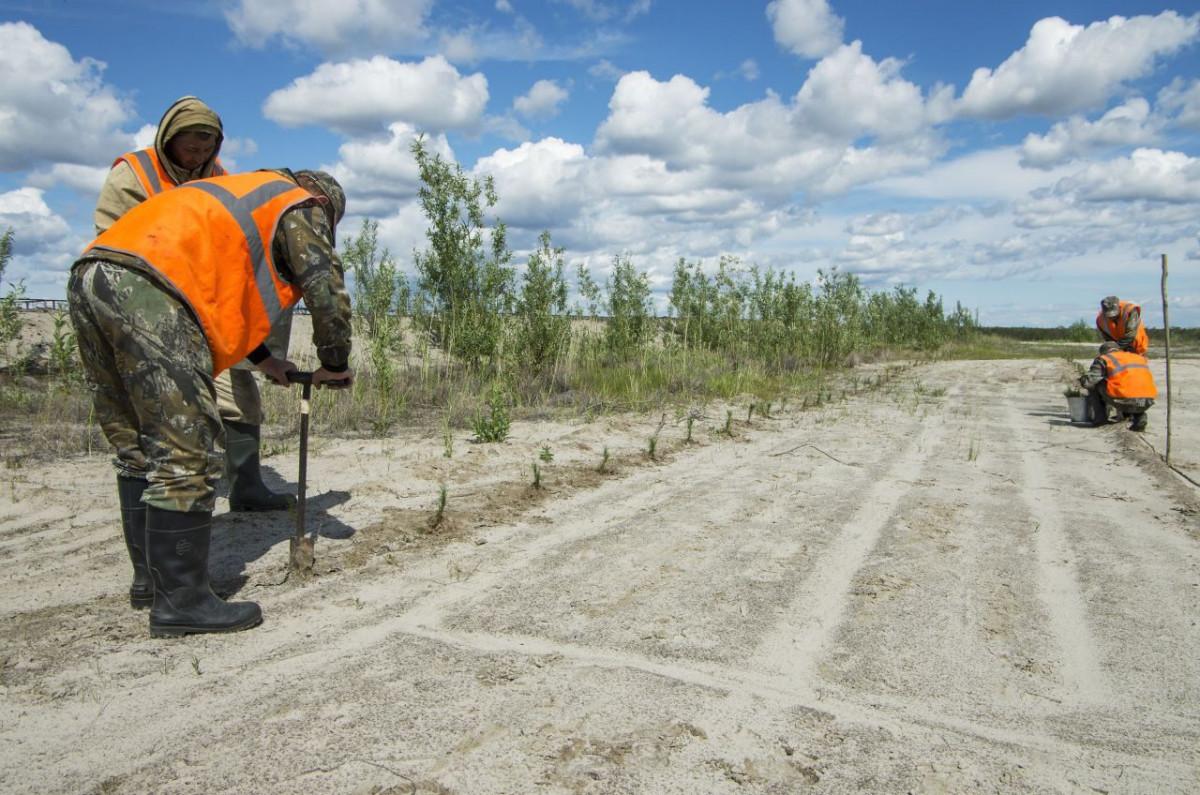 В Прокопьевском районе опробуют новую технологию рекультивации земли после добычи угля