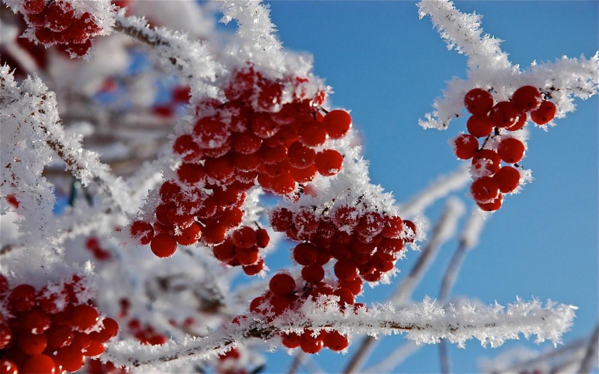 Синоптики рассказали, какой будет погода в первую неделю декабря