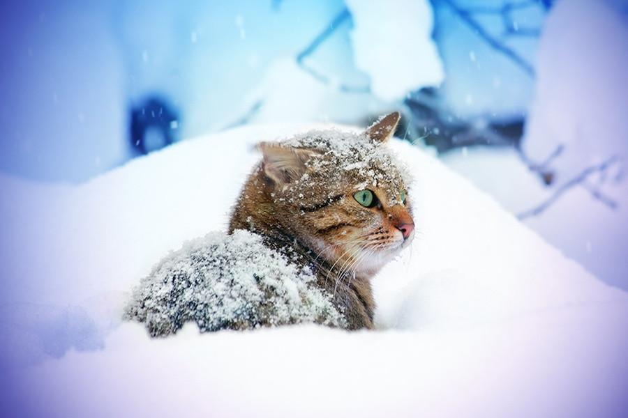Синоптики: на этой неделе будет морозно