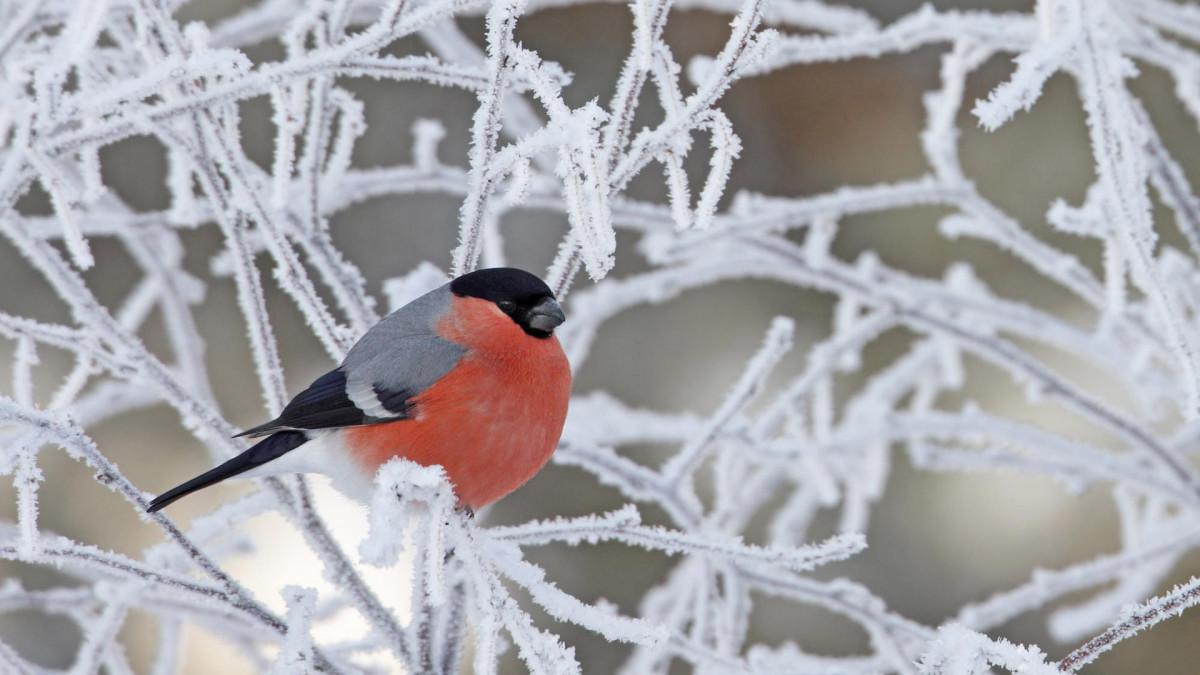 Синоптики: в Кузбасс идет похолодание местами до -37°С