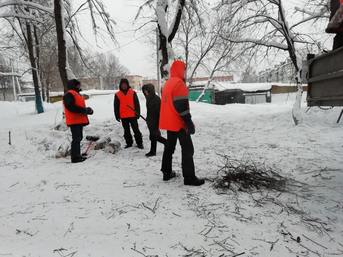 В Прокопьевске убрали опасный карагач