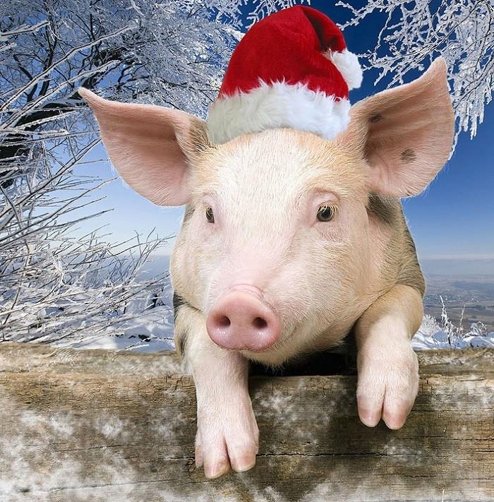 Каким будет приближающийся год желтой земляной свиньи: комментарии астрологов